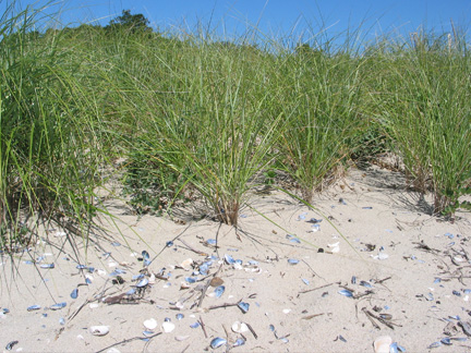 Beaches & Dunes